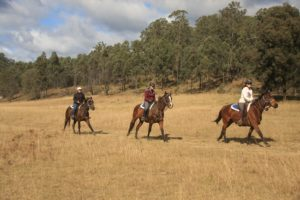 Experienced Horse Riding Sydney