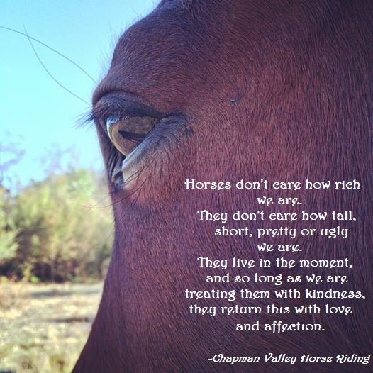 Beautiful Horse Quote