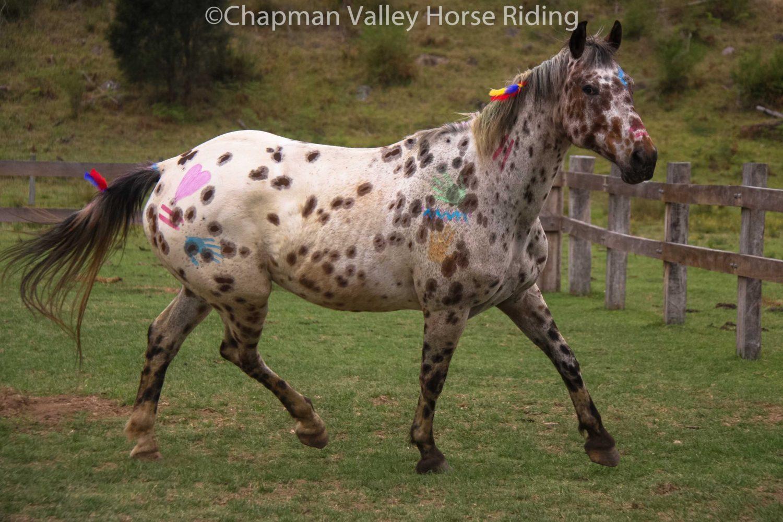 Halloweenhorses 6 Chapman Valley Horse Riding