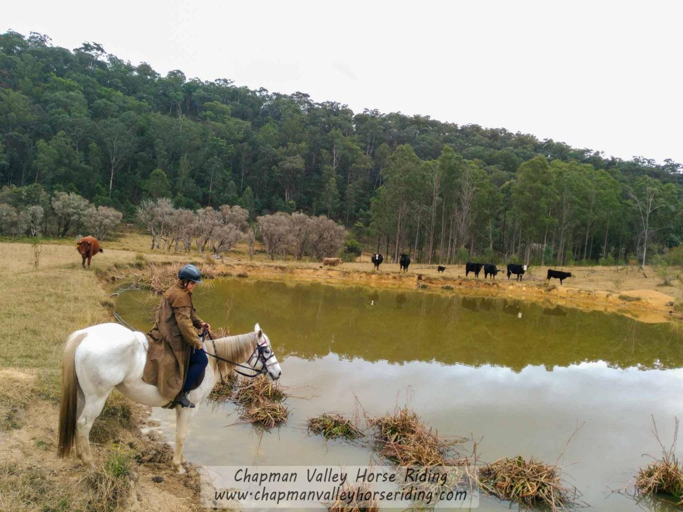 Horse Riding Hunter Valley