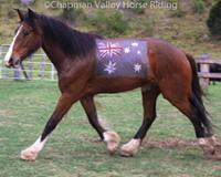 Lukey-chapman-valley-horses