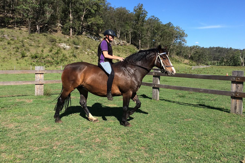 Rosie-chapman-valley-horses