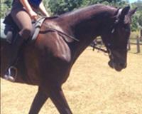 Toby-chapman-valley-horses