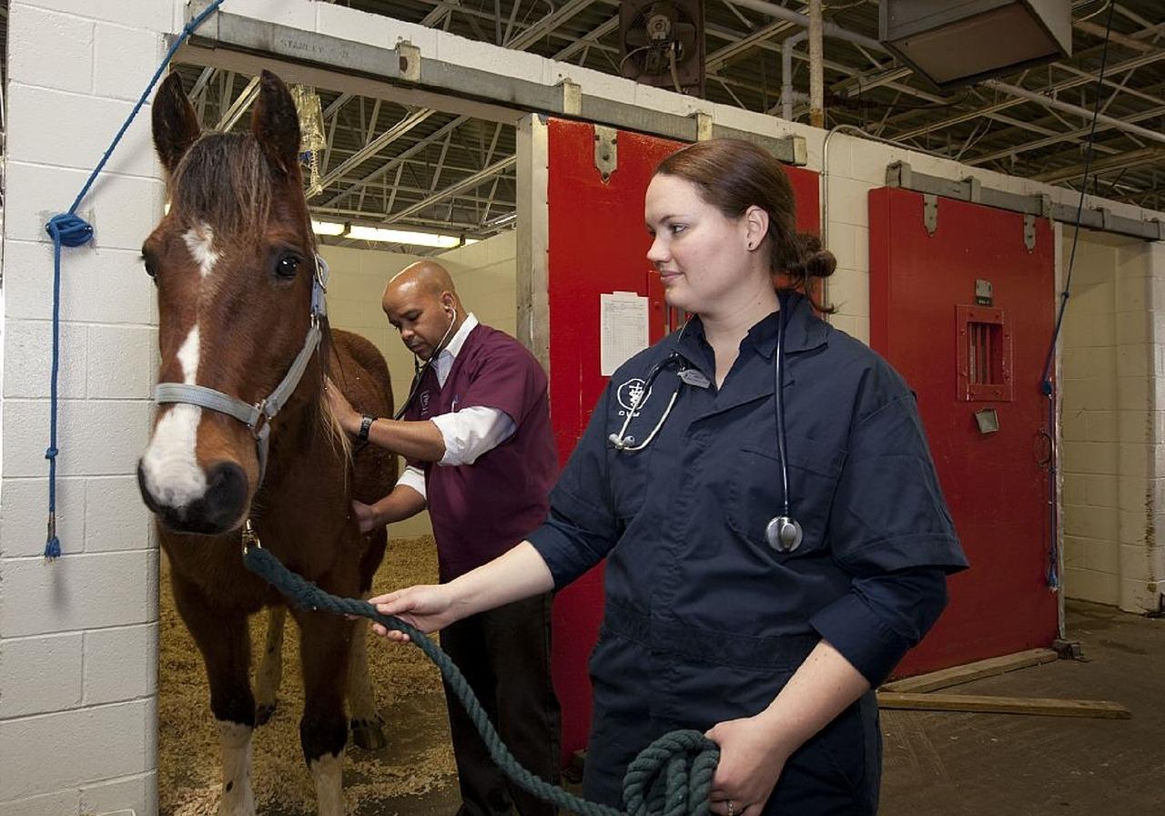 Caring-older-horse
